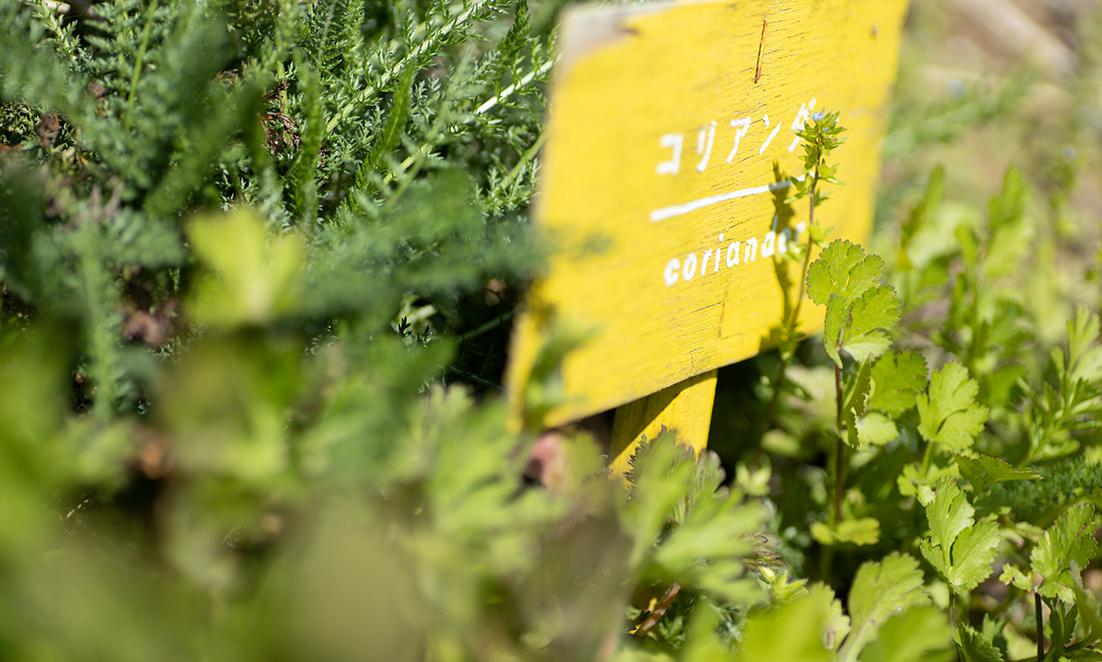 実験ガーデン 菜園日記